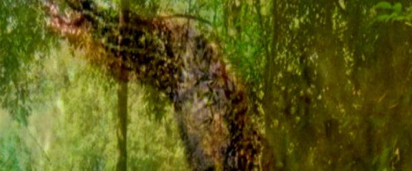 Ki no seirei – Geist der Bäume