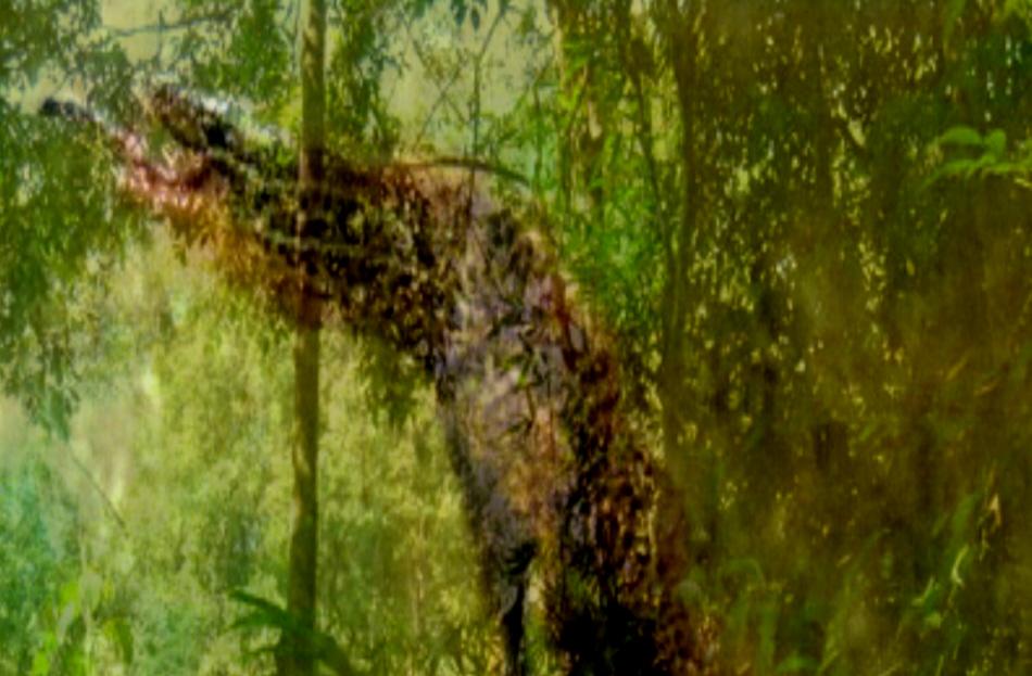 Geist der Bäume