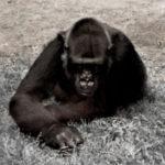 Profilbild von Apeman